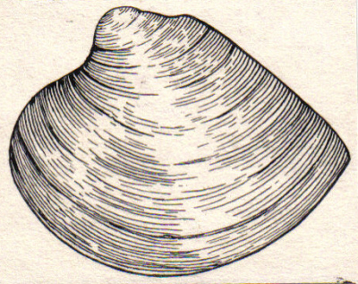 clam_psf.jpg