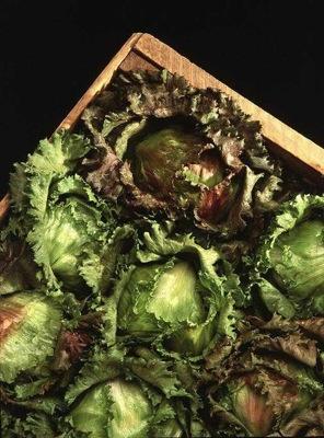 444px-lettuce_iceberg_variety.jpg