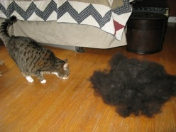 cat-vs-hairball1