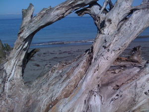 driftwood-window.jpg