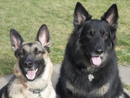 Argo & Stella-13