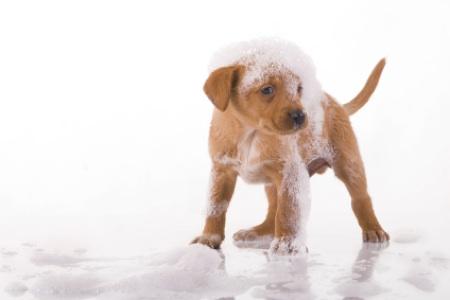 Keeping A Clean Green Pet Friendly Home